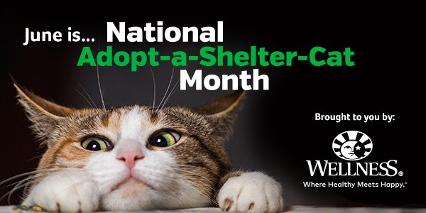 Adopt-A-Shelter-Cat-Month/BRANDY