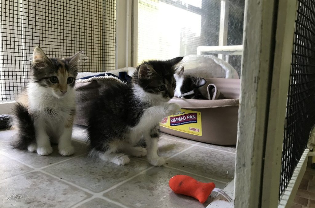 More Kittens In The House!