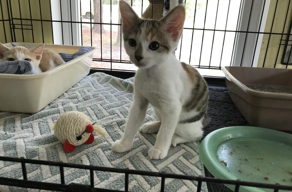 Even More Kittens In The House! – Pt. II