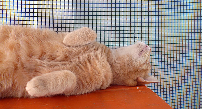 Cat Adoption Southport NC