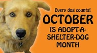 Days Of LEXI/Adopt A Shelter Dog Month