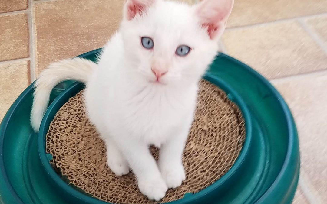 KENNY (M)–ADOPTED